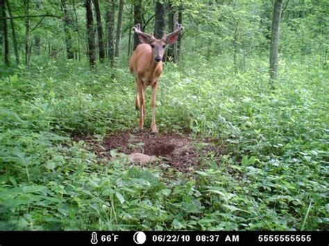 mineral licks for deer jpg 500x375